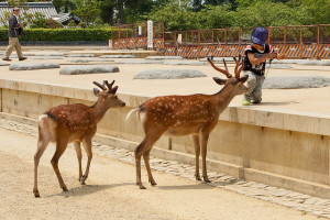 deers with a kid